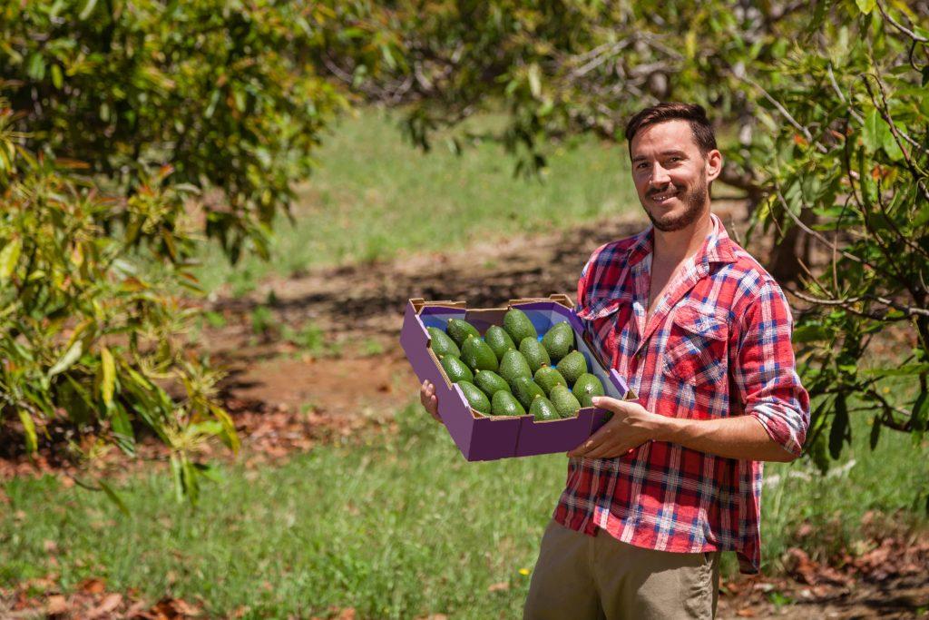 Man holding a crop of avocados